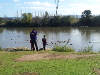 Duck Feeding Pughs Lagoon Richmond NSW